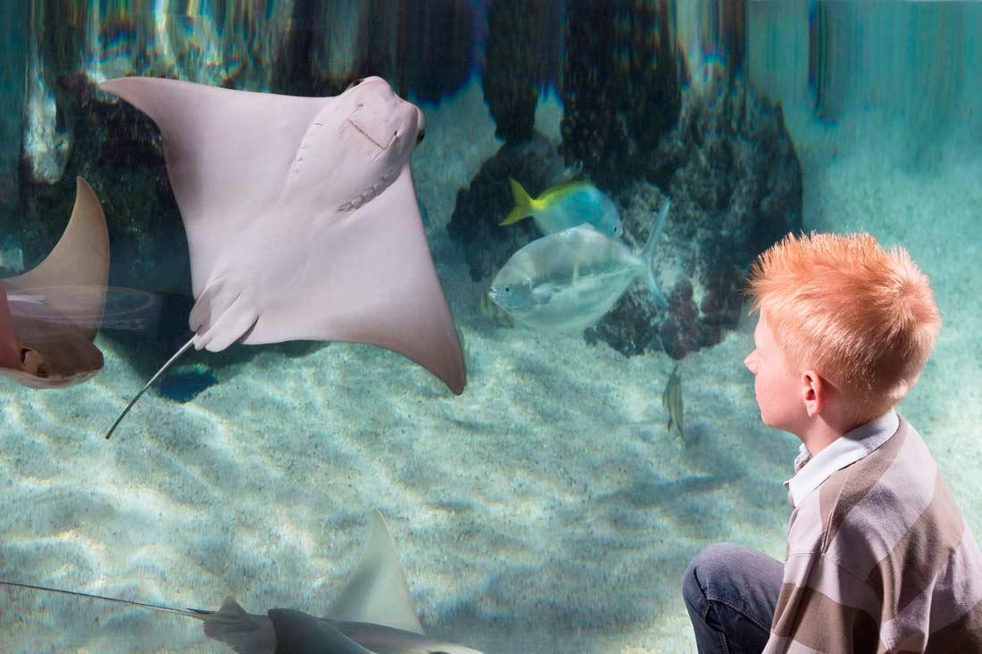 Rochen Aquarium im Sea Life Konstanz