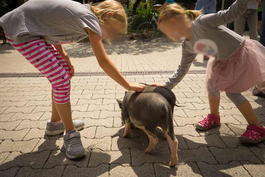 Freilaufende Schweine und viele andere Tiere streicheln